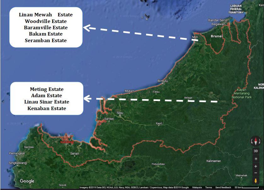 Oil Palm plantation - Shin Yang Group of Companies